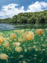 با تور مجازی از دریاچه عروس های دریایی دیدن کنید