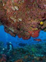 با تور مجازی به اعماق آبهای جزیره کومودو سفر کنید