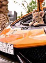 ببینید   جولان حیوانات وحشی در خانه بچه پولدارها