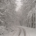 برف و کولاک در جنگلهای بهشهر مازندران