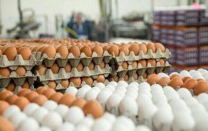 قیمت هر کیلوگرم تخم مرغ درب مرغداری افزایش یافت