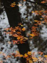تصاویر | پاییز تماشایی جماران