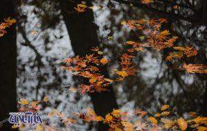 تصاویر   پاییز تماشایی جماران