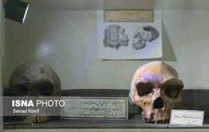 جای خالی موزهای درباره اپیدمیها