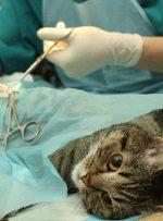 شیوع جراحی زیبایی حیوانات در ایران؛ دارندگی و برازندگی!