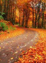 عناصر پاییزی؛ چیزهایی که ما را عاشق خزان کردند