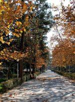 مایههای روانشناسیِ پاییز؛ غمِ زرد و نارنجی