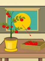 نحوه پرورش گوجه فرنگی در گلدان