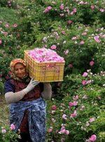 وضع مردم خوب نیست، گل نمیخرند