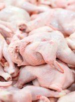 سرانه مصرف مرغ در کشور چند کیلوگرم است؟