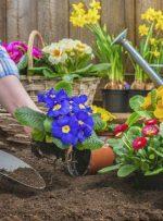 باغچههای زمستانی را به استقبال بهار ببریم