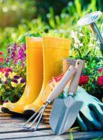 به هوای بهار باغبانی کنید