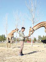 زرافهها و ۹۰۰ جانور نادر در حوالی تهران
