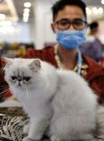 گربهها میتوانند کرونا بگیرند و منتقل کنند