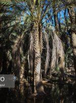 ایسنا – ایران زیباست؛ «ریگ یلان»