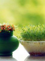 سبزه عید و خانه تکانی؛ آیین کهن نوروزی ایرانیان