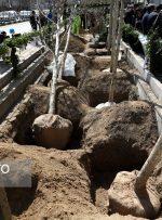 کاشت ۳۵۰۰ درخت «چنار» کهنسال در خیابان ولیعصر