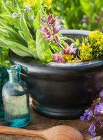 ۱۷ توصیه طب ایرانی برای فصل بهار/ مزاج فصل را بهتر بشناسید