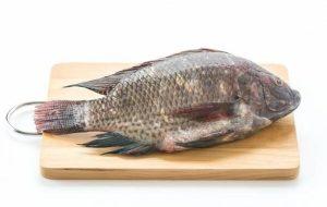این ماهی ها را بهتر است مصرف نکنید