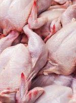 توزیع مرغ آغاز شد – خبرآنلاین