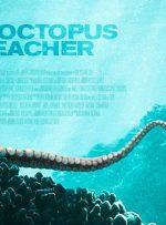 نگاهی به مستند My Octopus Teacher – نامهای عاشقانه به دامان طبیعت