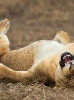تصاویر   بهترین عکسهای خندهدار از حیوانات وحشی