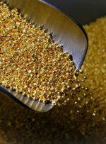 قیمت طلا ریخت – خبرآنلاین
