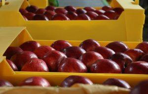 ارزش چقدر سیب صادر کرد؟