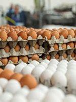 افزایش رسمی قیمت تخم مرغ در راه است