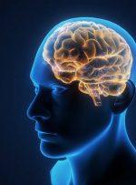 ویدئو / از هشدار کرونایی تا بررسی مهارت ریاضی در مغز