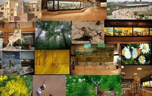 نقش موزهها و مراکز علم در حفاظت از محیط زیست