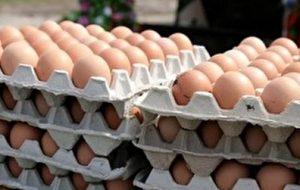 هر دانه تخم مرغ ۱۶۰۰ تومان شد