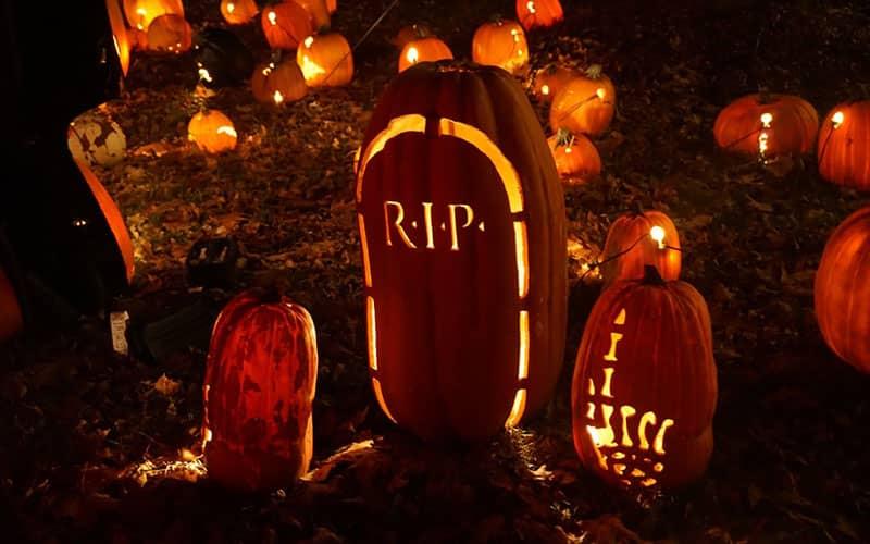 کدوتنبل های مختلف با طرح های متنوع برای هالووین