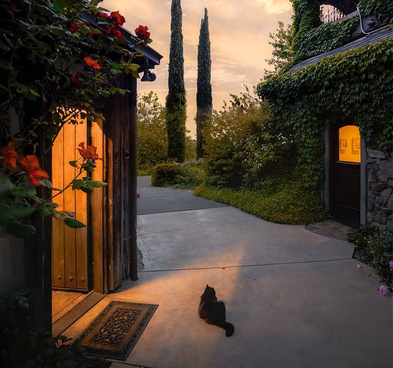 گربه سیاهی جلوی یک منزل روستای