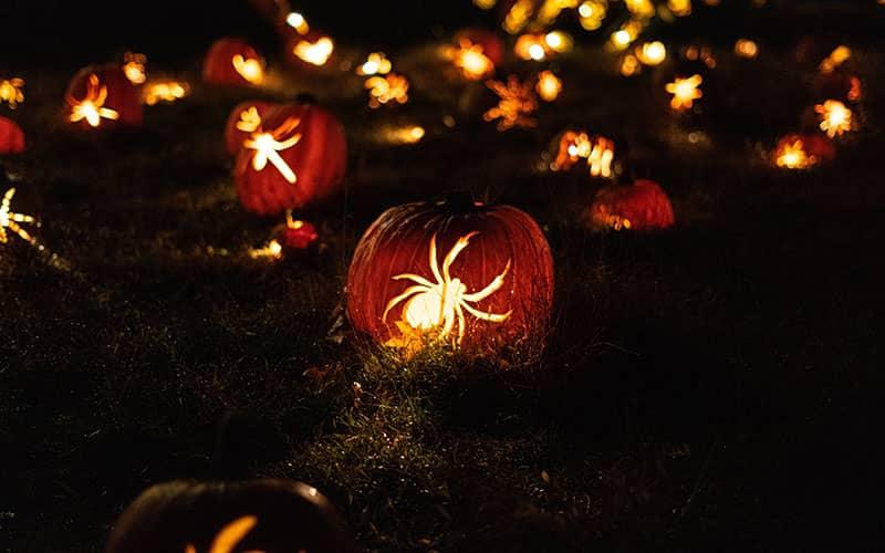 کدوهای هالووین با طرح عنکبوت در شب