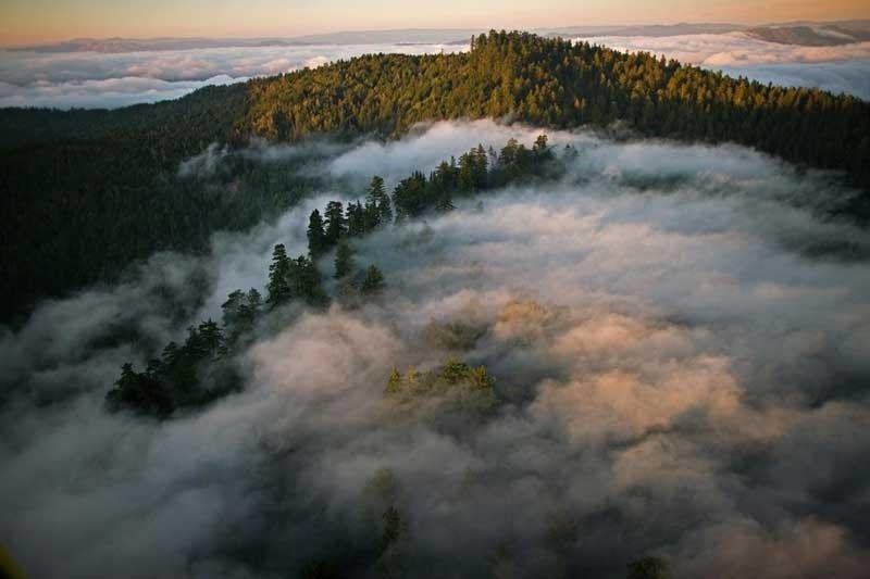 جنگلهای مهآلود ردوود کالیفرنیا
