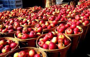 اختلاف قیمتی سیب از باغ تا تره بار چقدر است؟